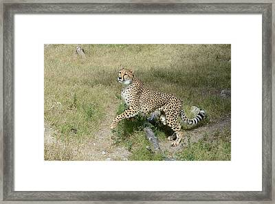 Framed Print featuring the photograph Jump 2 by Fraida Gutovich