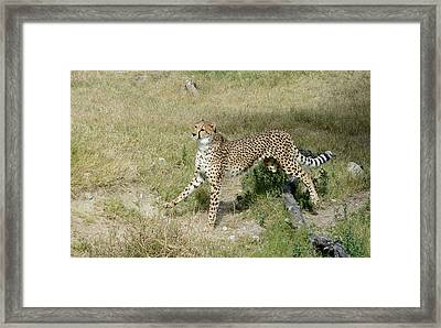 Framed Print featuring the photograph Jump 3 by Fraida Gutovich