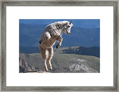 Framed Print featuring the photograph Jump by Gary Lengyel