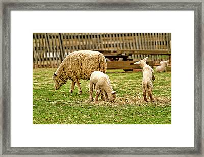 Jump You Might As Well Jump Framed Print by Geraldine Scull