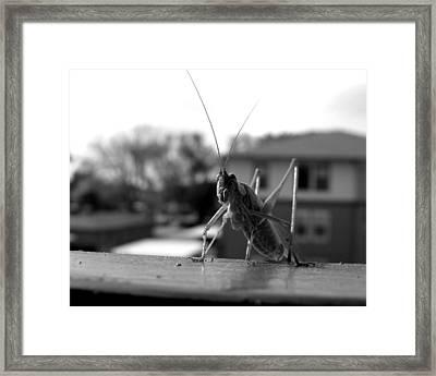 Jumper Framed Print by Lindsey Orlando