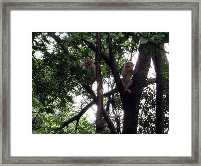 Jumping Around Framed Print by Ming Yeung