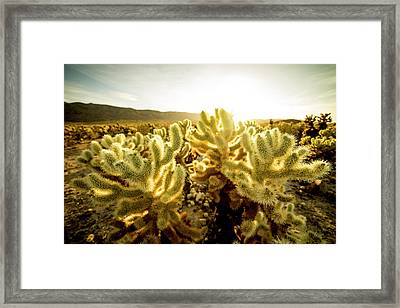 Jumping Cactus Framed Print by Peter Irwindale