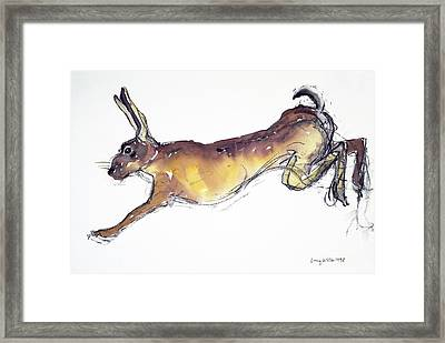 Jumping Hare Framed Print by Lucy Willis