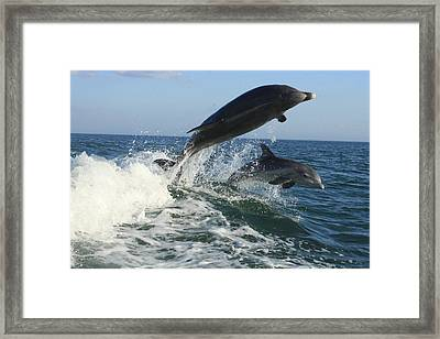Jumping Lessons Framed Print by Tara Moorman Photography