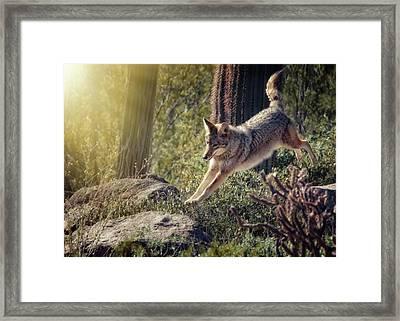 Jumping Rocks Framed Print