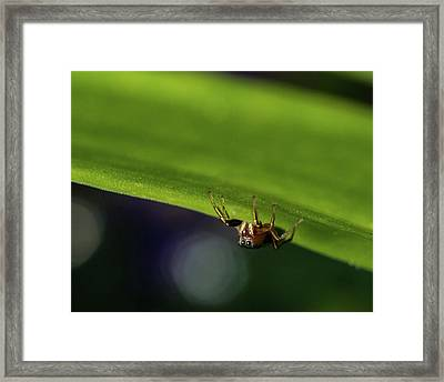 Jumping Spider On The Prowl Framed Print by Matthew Masterson