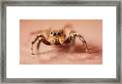 Jumping Spider Framed Print by Venura Herath