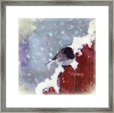 Junco In The Snow, Square Framed Print