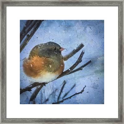 Junco On Winter Day Framed Print