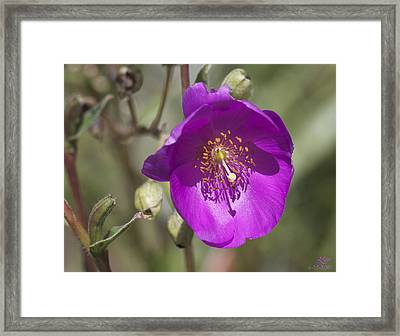 June 29 2010-n1 Framed Print