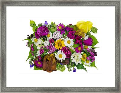 June Plants Concept Framed Print by Aleksandr Volkov