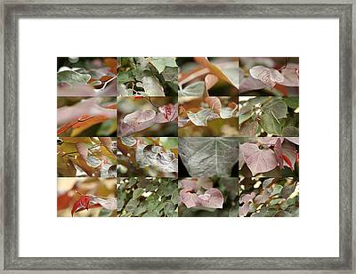 June Redbud Framed Print