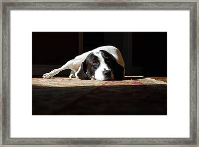 Junebug Framed Print