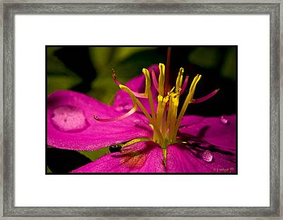 Jungle Blossom Framed Print by Daniel G Walczyk