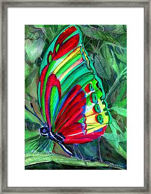 Jungle Butterfly Framed Print by Mindy Newman
