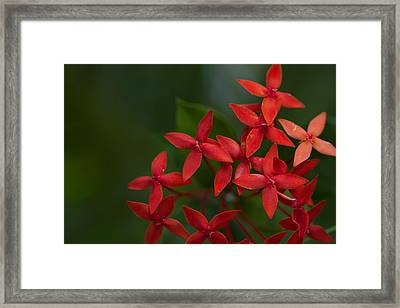Jungle Geranium Framed Print by Marlo Horne