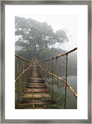 Jungle Journey 2 Framed Print by Skip Nall