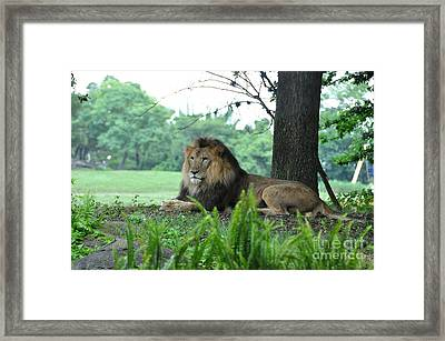 Framed Print featuring the photograph Jungle King by John Black