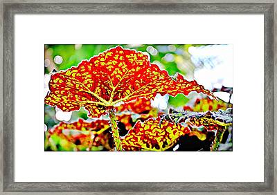Framed Print featuring the photograph Jungle Leaf by Mindy Newman