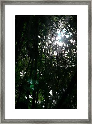 Jungle Light Framed Print by Brad Scott