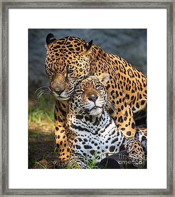 Jungle Love Framed Print