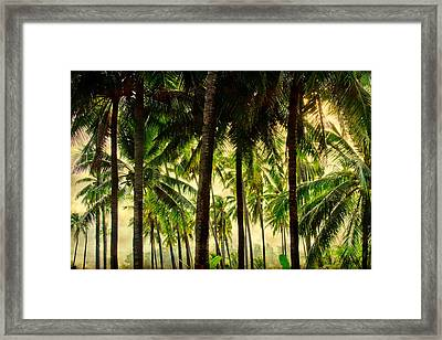 Jungle Paradise Framed Print by James BO  Insogna