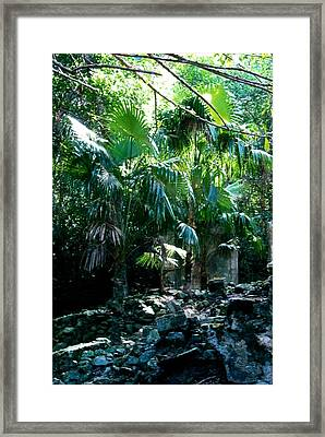 Jungle Sun  Framed Print by Robert Nickologianis