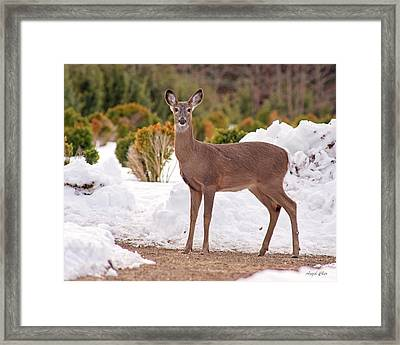 Framed Print featuring the photograph Junior by Angel Cher