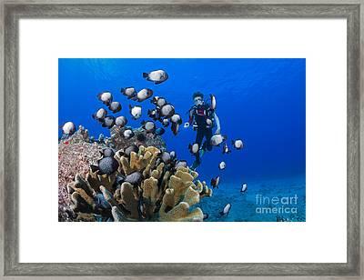 Junior Certified Scuba Diver Framed Print by Dave Fleetham