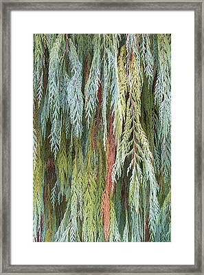 Framed Print featuring the photograph Juniper Leaves - Shades Of Green by Ben and Raisa Gertsberg