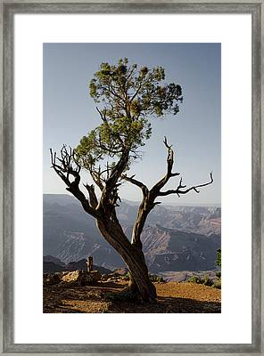 Juniper Tree At Grand Canyon II Framed Print
