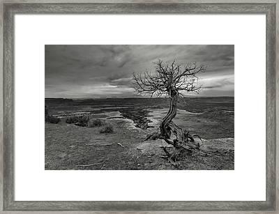 Juniper's View Framed Print