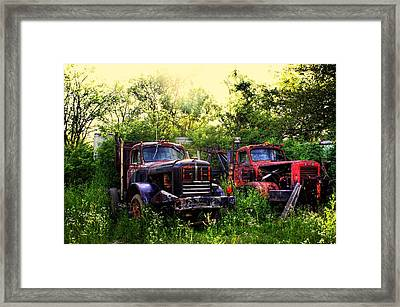 Junkyard Dogs Framed Print by Off The Beaten Path Photography - Andrew Alexander