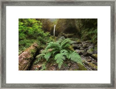 Jurassic Forest Framed Print by David Gn
