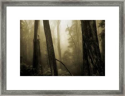 Jurassic Memories Framed Print by Mihai Florea