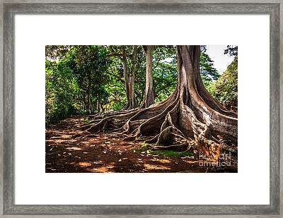 Jurassic Park Tree Group Framed Print