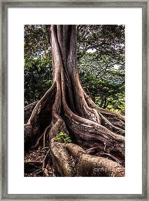 Jurassic Park Tree Roots Framed Print