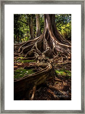 Jurassic Park Tree Trailing Root Framed Print