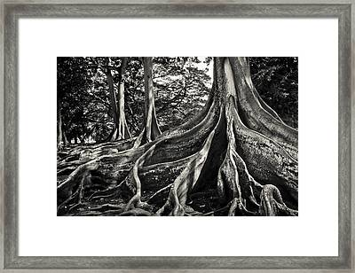 Jurassic Trees Framed Print by Thorsten Scheuermann