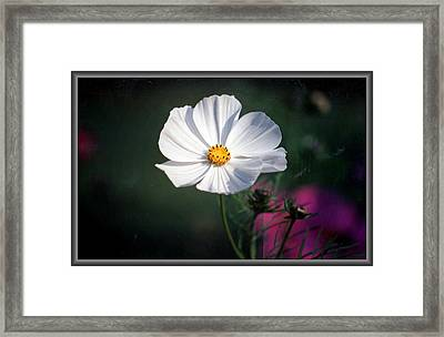 Just A Cosmos Framed Print by Russ Mullen