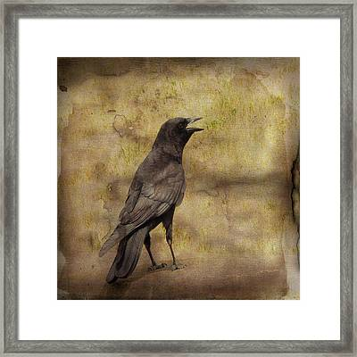 Just A Crow  Framed Print