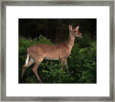 Just A Deer Framed Print by Bill Stephens