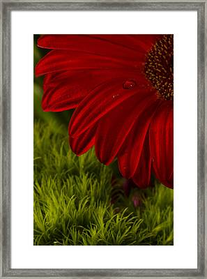 Just A Drop Framed Print by Marlo Horne