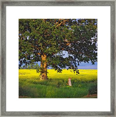 Just A Few. North Hero, Vermont Framed Print by George Robinson
