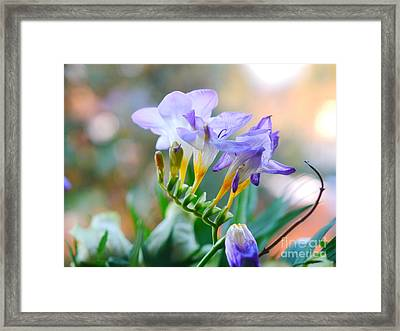 Framed Print featuring the photograph Just A Freesia by Lance Sheridan-Peel