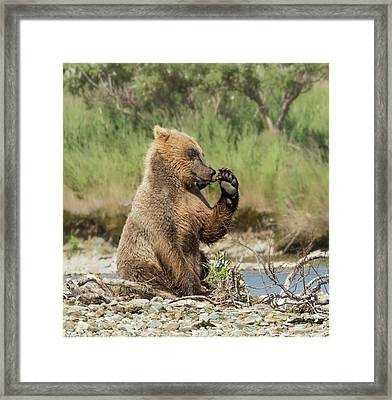 Framed Print featuring the photograph Just A Little Fiber by Cheryl Strahl