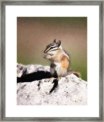 Just A Little Nibble Framed Print by Lana Trussell