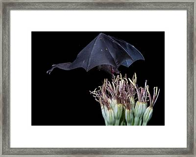 Just A Little Tast Framed Print by E Mac MacKay