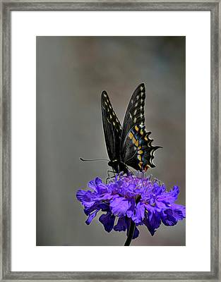 Just A Quick Stop Framed Print by Jodie Minnillo